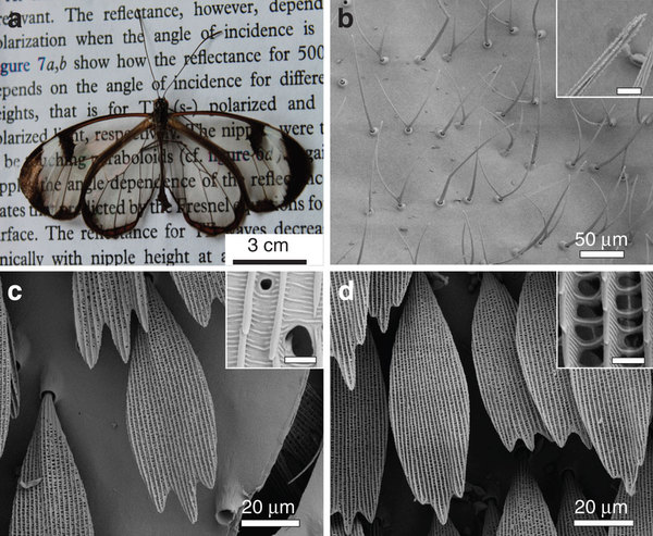 mariposa-pantalla-2